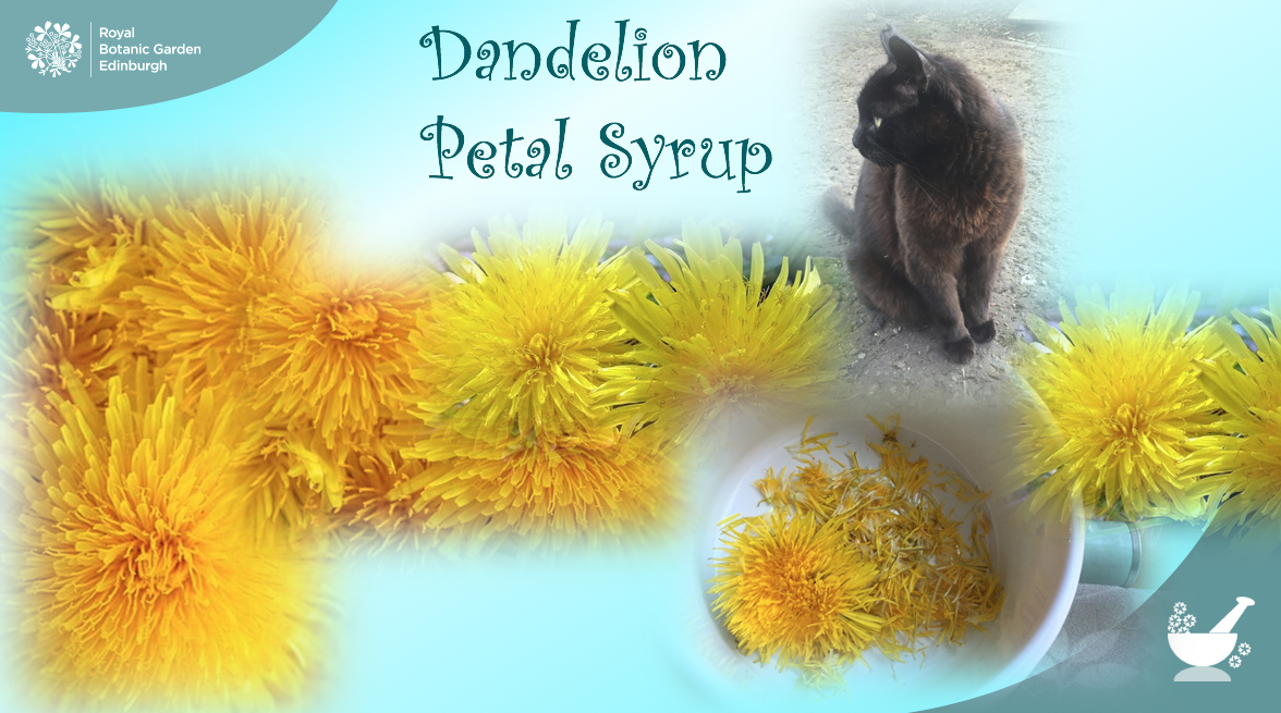 Dandelion Petal Syrup