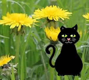 Marley the cat in a dandelion field