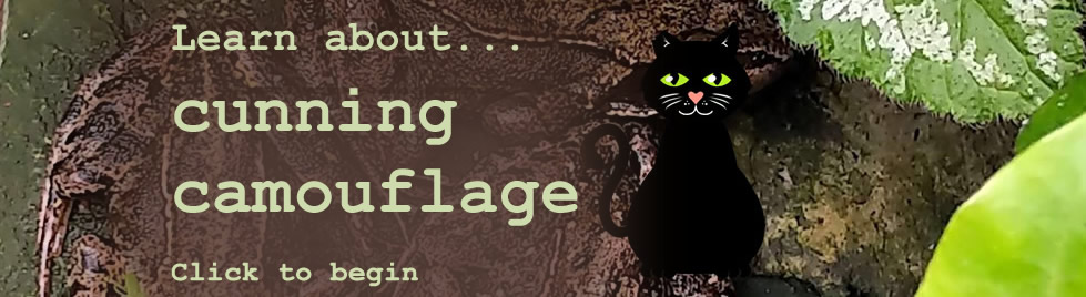 Learn about cunning camouflage. Click to begin