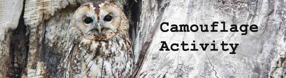 Camouflage activity